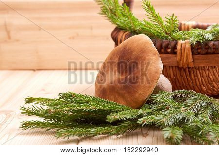 Autumn still-life with mushroom, a basket and branches of fir-tree on a wooden background.