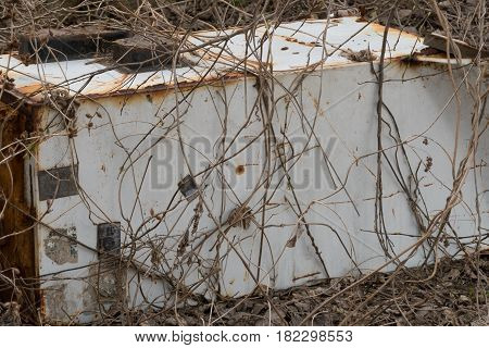 Old refrigerator discarded in wooded area in South Korea covered in dead vines.