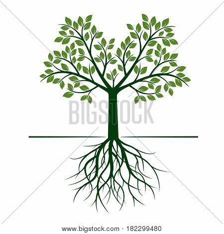 Shape of green Tree with Leafs and Roots. Vector Illustration.