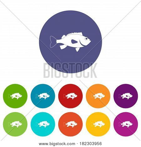 Sea bass fish icons set in circle isolated flat vector illustration