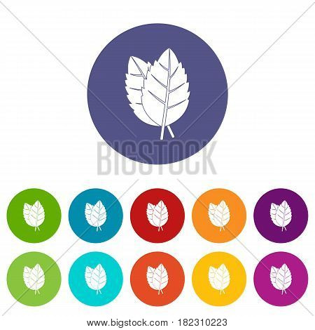Rosemary spice icons set in circle isolated flat vector illustration