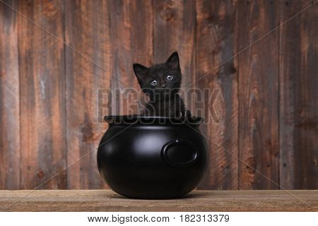 Cute Kitten in Halloween Cauldron on Wood Background