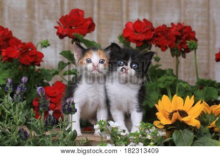 Adorable 3 week old Baby Kittens in a Garden Setting