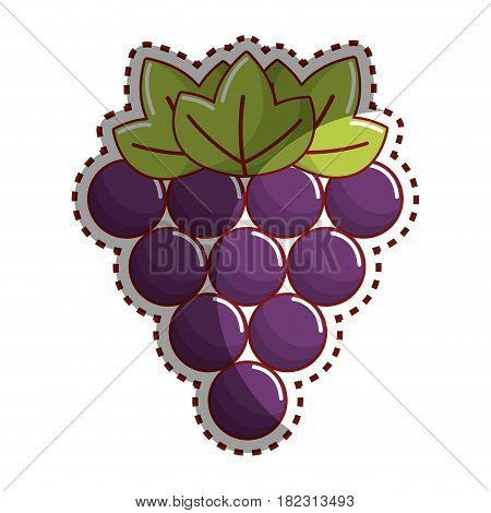 sticker grapes fruit icon image, vector illustration design stock