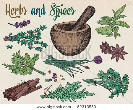 beautiful hand drawing healthy herbs and spices mortar. Herbs, basil, chervil, chives, cilantro, coriander, dill, mint, oregano, parsley, rosemary, rocket, sage, tarragon, thyme