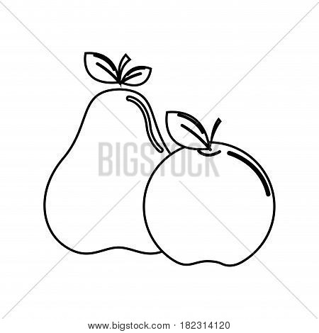 silhouette pear and apple fruit icon stock, vector illustration design