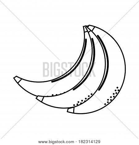 silhouette babanas fruit icon stock, vector illustration design image