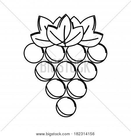 silhouette grapes fruit icon image, vector illustration design stock