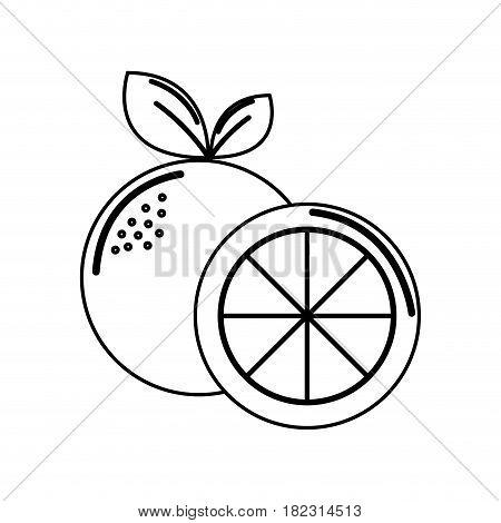 silhouette orange fruit icon stock, vector illustration design image