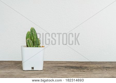Closeup cactus in white plastic pot on blurred wood desk and white cement wall textured background with copy space