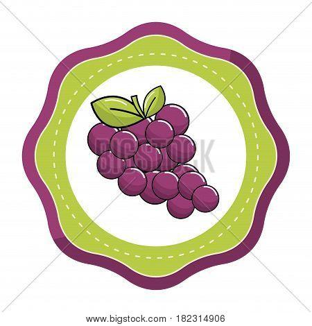 emblem sticker grapes fruit icon image, vector illustration design stock