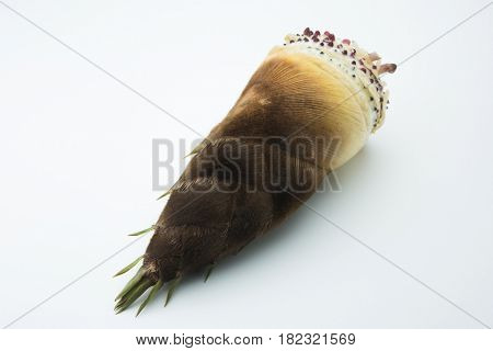 fresh harvested bamboo shoot or bamboo sprouts with outer husk still intact, isolated on natural white background.