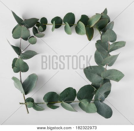 Frame of eucalyptus branches on a white background top view