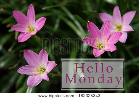 flowers blossom with text hello monday