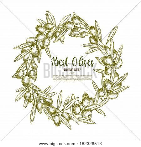 Green olive branches wreath vector poster for olive oil product or Italian restaurant design. Fresh olives fruits harvest symbol for natural organic food store, cooking or pharmaceutical industry