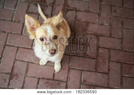 Closeup of cute young stray dog with face injure sitting on pavement