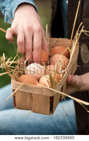 farmer woman gathering fresh eggs into basket at hen farm in countryside. Soft focus