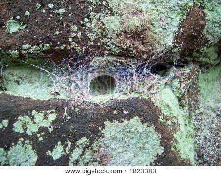 Funnel Web Spider Webs