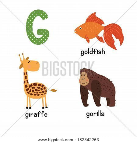 Cute zoo alphabet in vector.G letter. Funny cartoon animals: Goldfish giraffe, gorilla. Alphabet design in a colorful style.
