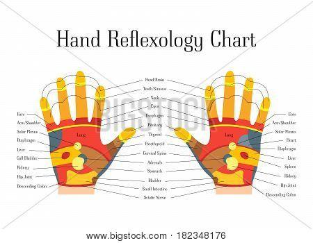 Cartoon Reflexology Hands Alternative Medicine Flat Style Design Chart View Relax Massage. Vector illustration