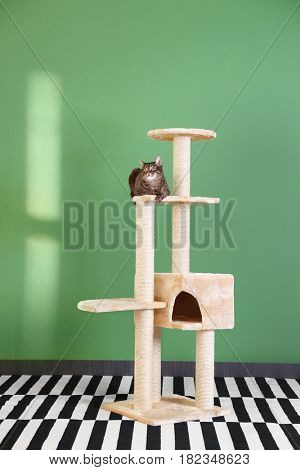Cute cat sitting on tree against green wall background