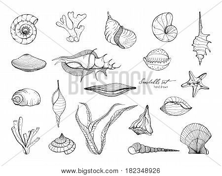 Hand drawn seashells collection. Set of seaweed, coral, starfish, shell. Vector black and white illustration