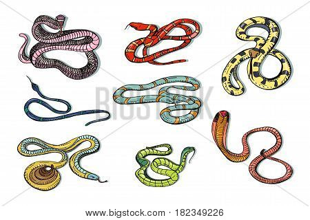 Set of various snake viper, cobra and other. Colorful hand drawn collection serpent. Vector illustration