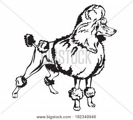 Decorative dog Poodle black and white vector illustration