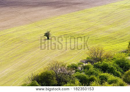 Spring landscape with green and brown field and green bushes