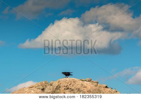 Black crow on a big stone with a beautiful sky of background