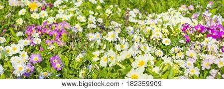Field of wild flowers is the end of spring early summer. Amazing amount of flowers. Selective focus.