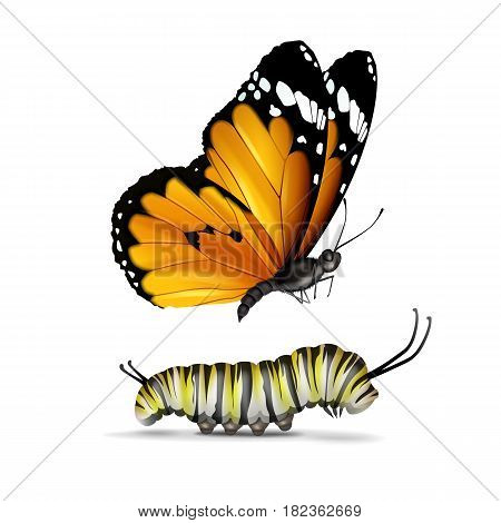 Vector realistic Plain Tiger or African Monarch butterfly and caterpillar close up side view isolated on white background
