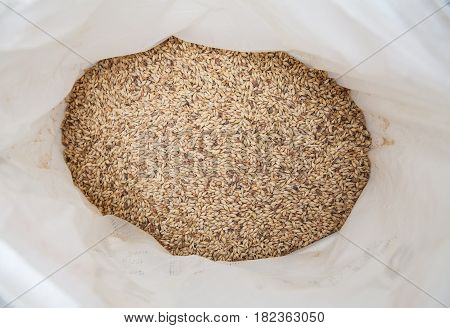 Malt grains background. Ingredient for beer production