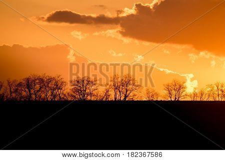 Silhouttes of trees on orange background of dramatic savanna sunset