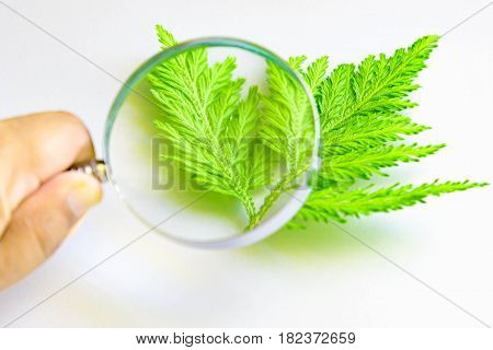 Hand Holding A Magnifying Glass Through Which You Can See Leaves