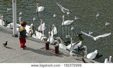 Child and swans at the Kleine Alster in Hamburg, Germany