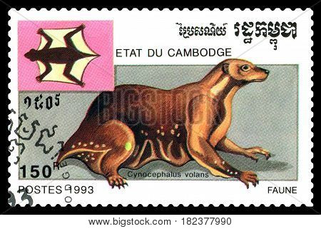 STAVROPOL RUSSIA - April 17 2017 : A Postage Stamp Printed in the Cambodia Shows melanogaster flying (Cynocephalus volans) circa 1993