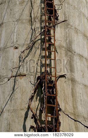 The rusty rungs of an old ladder used to climb a concrete poured silo or water tower.