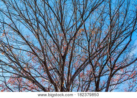 Texture of the bare branches of the autumn oak tree on the background of the clear sky