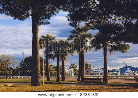 The Port Canto Harbour And Garden In Cannes's City Centre