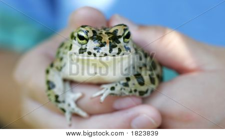 Boy Holds A Frog