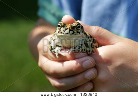 Youth Holds A Frog