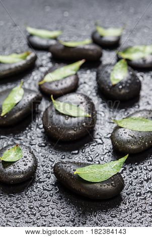 Several black basalt massage stones with green leaves on them covered with water drops distributed on a black background