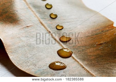 Creative layout of water drops on brown leaves season change time concept.