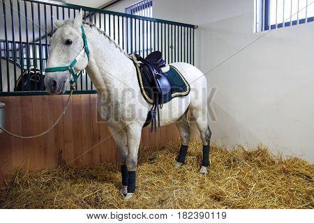 Beautiful leather saddle for equestrian sports on horseback