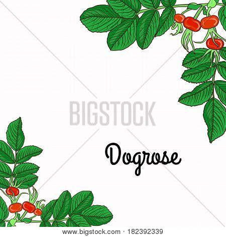 Card With Branch Of Dog Rose