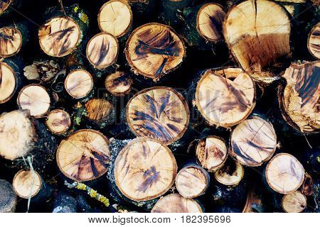 Sawed wood background. Stack of logs of different trees in barn.