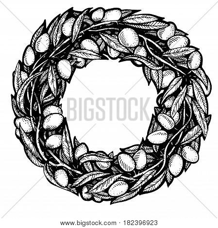 Sketch olive branch with olives. round wreath with branches of olives, olive label, hand drawn illustration