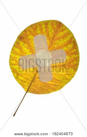 yellow leaf isolated on a white background