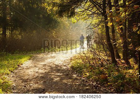 Two men are busy with nordic walking in the morning in the park sunbeams and fog a path that goes into the distance.